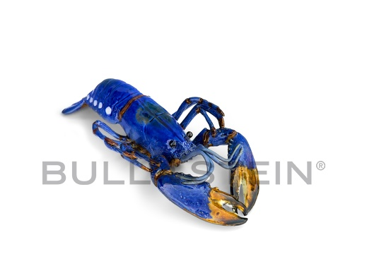 LOBSTER - BLUE