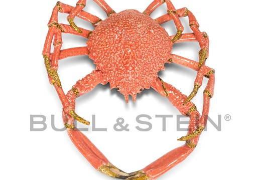 SPIDER CRAB - ROSE - GIANT
